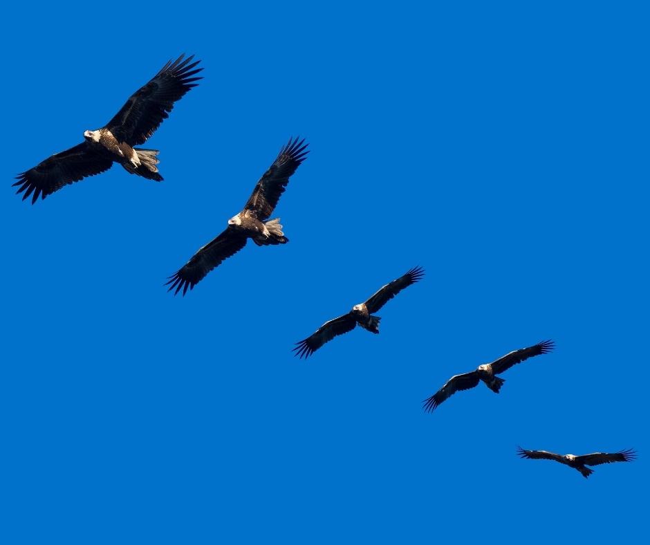 sites/25768776/Eagles Flying_Gzq2ycr.jpg